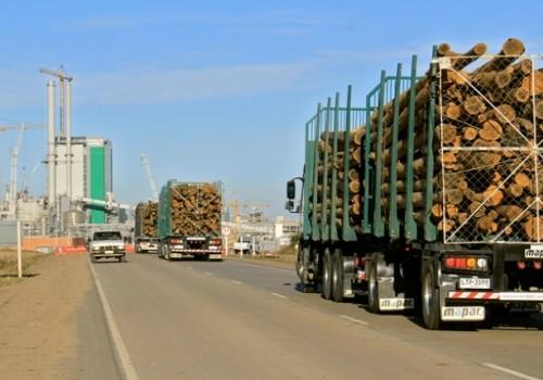 Exportaciones del sector forestal aumentaron 16,7%